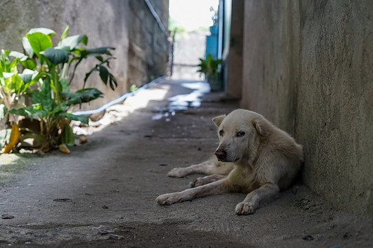 how to help the homeless dogs and cats of Crete, image of a homeless dog