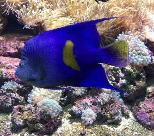 Creta Aquarium Review Our Experience