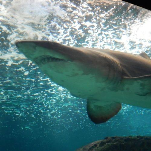 Creta-aquarium-review